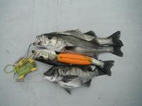 <p>朝は冷え込みましたが、沖の北で爆釣!!</p> <p>東大阪市の中村様、64cmまでのハネ18匹、45cm程度のチヌ3匹</p> <p>ウキ釣り 餌シラサエビ</p>