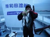 <p>和泉市の松原様、沖の白灯で、43~45cmのチヌ3匹 落とし込み パイプ</p>