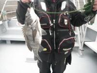 <p>チヌ魚影が増えています。落とし込み、フカセも…</p> <p>餌取りが多い中釣れました!</p> <p>チヌONE A氏、沖のカーブで、チヌ42cm フカセ</p>