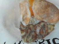 <p>岸和田市の西村様 沖の一文字で 良型のタコ 1パイ</p> <p>その他に 岸和田市の田中様も 良型のメバル ガシラ アコウ</p> <p>浮き釣り 餌シラサエビ</p>