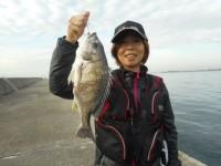 <p>和泉市の松原様の奥様 沖の北で 40センチオーバー</p> <p>落とし込み</p>
