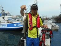 <p>大東市の松山様、旧一文字の赤灯で、ハネ42cm 1匹</p> <p>ウキ釣り 餌シラサエビ</p>