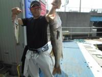 <p>堺市の奥野様、沖の一文字白灯で、ハネ62cmまで2匹</p> <p>ウキ釣り 餌シラサエビ</p>