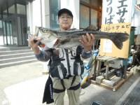 <p>奈良の小寺様、沖の白灯で、スズキ78cm 1匹</p> <p>ウキ釣り 餌シラサエビ</p>