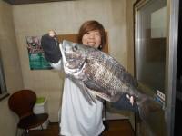 <p>和泉市の松原様、旧一文字で、50.2cmのチヌ!!</p> <p>夫婦で合計 37cm~50.2cmを13匹 落とし込み イガイ</p>