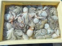 <p>泉大津市の鳩山様、沖の一文字スリットで、タコ300gまで21杯</p> <p>タコエギ</p>