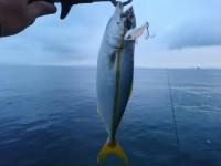 <p>和泉市の九鬼様 沖の北で ツバス</p> <p>ルアー</p> <p>イワシなど 小魚は多く見れました。</p>