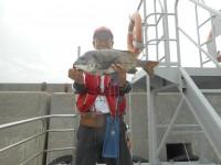 <p>沖一文字ではサビキでマメアジが好釣です。</p> <p>富田林市の山本様、スリットで、51cmのチヌ</p> <p>落とし込み イガイ</p>