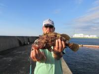 <p>アコウ・ガシラ好釣!!</p> <p>渡辺様、沖の一文字白灯で、アコウ 40cm 1匹</p> <p>のませ釣り 餌アジ</p>