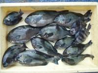 <p>堺市の久保様、スリットで、グレ 11匹・サンバソウ 2匹等</p>