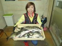 <p>和泉市の松原奥様、沖の北で、47cmまでのチヌ 8匹の爆釣!!</p> <p>落とし込み イガイ</p> <p>土井ちゃん、美喜やったよぉ~</p>