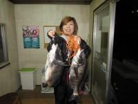 <p>和泉市の松原様、沖の一文字北でイガイの落とし込みで</p> <p>48cmまでの良型チヌ2匹釣られました!!</p>