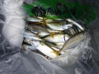 <p>岸和田市の金城様 沖の北で</p> <p>良型のアジ 約40匹</p> <p>サビキ アミエビでの釣果です。</p>