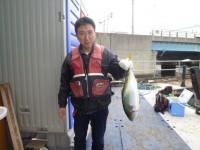 <p>和泉市の坂本様、沖の一文字スリット1番で、メジロ62cm1匹</p> <p>のませ釣り 餌アジ</p>