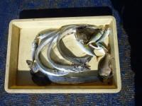 <p>朝から風が強く釣りずらいなか 大阪市の中村様 沖の北で</p> <p>タチウオ カワハギ アジなど</p> <p>タチウオは ゲッターでの釣果でした</p>
