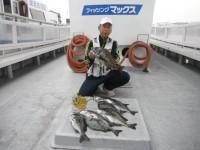 <p>和泉市の松原様、沖の北で、46cmまでのチヌ 11匹</p> <p>落とし込み イガイ</p>
