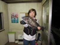 <p>和泉市の松原様、沖の北で、44cmのチヌ</p> <p>落とし込み イガイ</p>