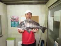<p>和泉市の松原様、中波止3番で、48.3cmのチヌ</p> <p>フカセ釣り オキアミ</p>
