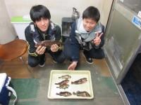 <p>大阪市の天堂君・瀬川君、旧一文字の赤灯で</p> <p>34cmまでのアコウ等、10数匹釣られました!</p> <p>アオイソメのウキ釣りです</p>