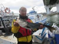 <p>大阪市の金子様、旧の一文字赤灯で、スズキ 74cm 1匹</p> <p>のませ釣り 餌アジ</p>