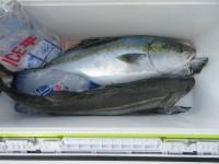 <p>枚方市の山上様、沖の一文字北で、メジロ良型1匹・スズキ良型1匹・太刀魚 指3本まで2匹</p> <p>メジロ・スズキ(のませ釣り・アジ)太刀魚(ウキ釣り・キビナゴ)</p>