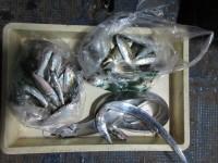 <p>東大阪市の山本様・大阪市の池田様、沖一文字北で</p> <p>太刀魚3匹・小アジ50匹・イワシ30匹の釣果です!!</p>