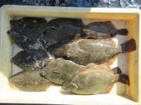 <p>本日も沖のカーブでカレイ好釣!!</p> <p>カレイ釣り大好きさん、32cmまでのカレイを、11匹</p> <p>青イソメ</p>