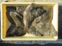 <p>泉大津市の大西様(2人)沖の一文字カーブで、カレイ34cmまで11匹</p> <p>投げ釣り 餌青イソメ</p>