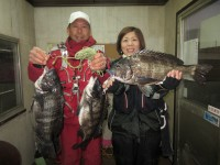 <p>和泉市の松原様(夫婦)中波止2番で、チヌ49cmまで3匹</p> <p>フカセ釣り 餌オキアミ</p>