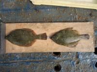 <p>東大阪市の榎本様、沖の北で、31.5cmまでのカレイ 2匹</p> <p>投げ釣り 餌青イソメ</p>