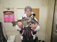 <p>河内長野市の中塚様、中波止で、49cmのチヌ</p> <p>フカセ釣り 餌オキアミ</p>