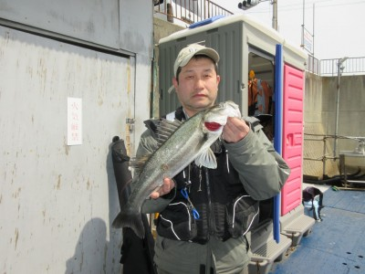 <p>堺市の福岡様、沖の一文字白灯で、ハネ56cm 1匹</p> <p>ウキ釣り 餌シラサエビ</p>