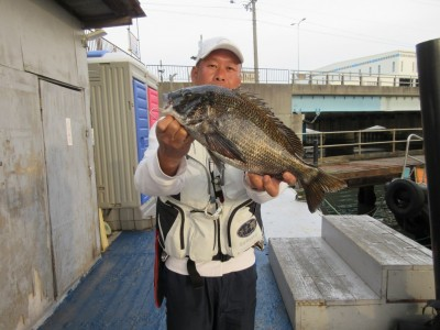 <p>和泉市の松原様、沖の一文字北で、チヌ43.5cm 1匹</p> <p>フカセ釣り 餌オキアミ</p>