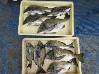 <p>忠岡町の前田様、沖の一文字で、チヌ45cmまで9匹</p> <p>フカセ釣り 餌オキアミ</p>