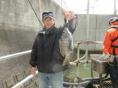 <p>堺市の奥野様、沖の一文字白灯で、チヌ 34cm 1匹</p> <p>ウキ釣り 餌シラサエビ</p>