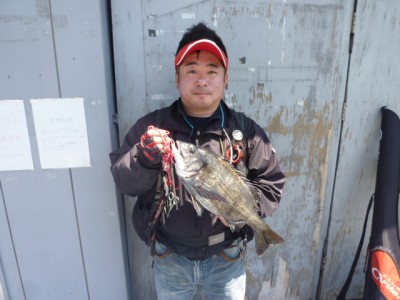 <p>高石市の前田様、旧一文字白灯で</p> <p>45cmのチヌです!!</p> <p>釣り方、落とし込み</p>