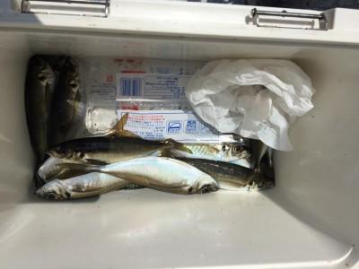 <p>大阪市の田仲様、サビキ釣りで</p> <p>26cmまでのアジ15匹・29cmまでのサバ2匹です!!</p>