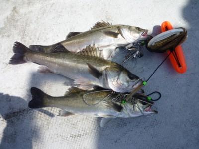 <p>岸和田市の田中様、沖一文字北で</p> <p>54cmまでのハネ3匹です!</p> <p>釣り方、エビ撒き釣り</p>