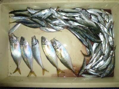 <p>東大阪市の矢木・山本様、旧の一文字で、アジ 5匹・イワシ 大漁</p> <p>サビキ 餌アミエビ</p>