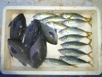 <p>堺市の岡田様、沖の一文字北で、グレ 28cmまで5匹・アジ 23㎝まで11匹</p> <p>ヌカギリ 餌石ゴカイ</p>