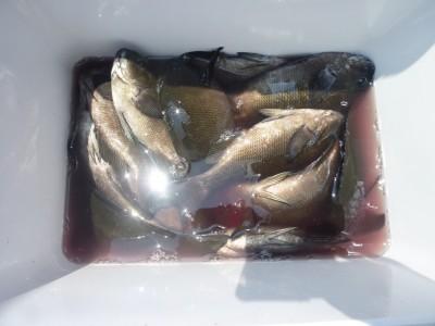 <p>橋本市の柳本様、沖一文字北で</p> <p>28cmまでのグレ15匹程</p> <p>釣り方・ヌカギリ</p>