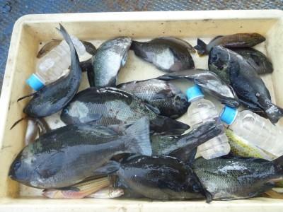 <p>堺市の久保様、沖の一文字で、グレ 28.5㎝まで11匹</p> <p>フカセ釣り 餌青イソメ</p>
