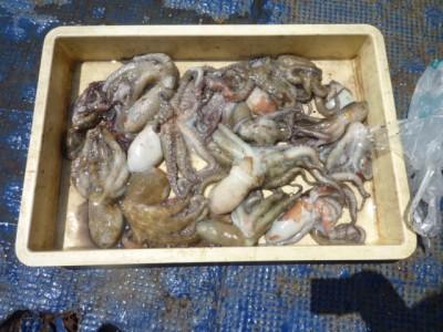 <p>和歌山市の迎井様、旧一文字カーブで</p> <p>300gまでのタコ15匹程</p> <p>釣り方・タコエギ</p>