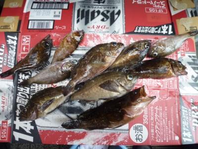 <p>岸和田市の匿名希望様、旧の一文字赤灯で、ガシラ・メバル・アコウ 10匹</p> <p>ウキ釣り 餌シラサエビ</p>