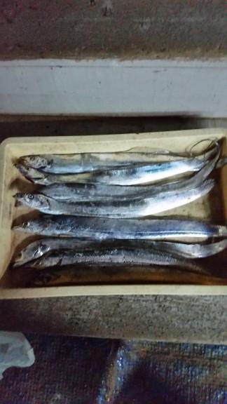 <p>生駒市の長藤様、沖の一文字北で、タチウオ 指3本半まで8匹</p> <p>ウキ釣り 餌キビナゴ・サンマ</p>