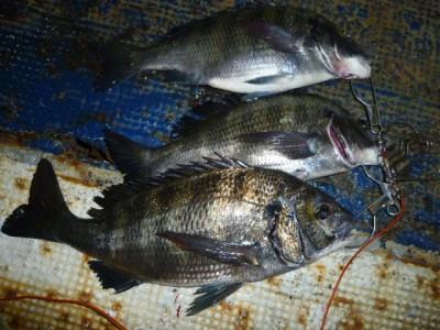 <p>岸和田市の白田様、沖の一文字北で、チヌ 48.2㎝まで8匹</p> <p>フカセ釣り 餌オキアミ</p>