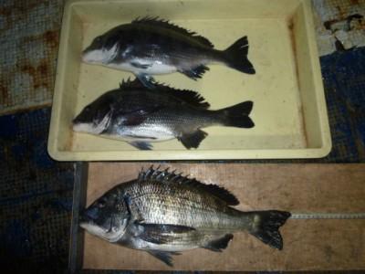 <p>泉佐野市の岡田様、旧の一文字3番で、チヌ 44cmまで3匹</p> <p>フカセ釣り 餌コーン</p>