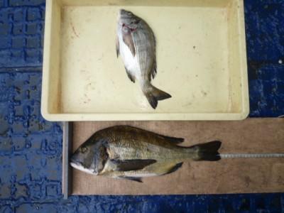 <p>豊中市の辻本様、旧の一文字3番で、チヌ 44cmまで2匹</p> <p>フカセ釣り 餌コーン・練り餌</p>