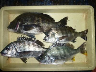 <p>堺市の岡田様、旧の一文字3番で、チヌ 42cmまで4匹</p> <p>フカセ釣り 餌コーン</p>