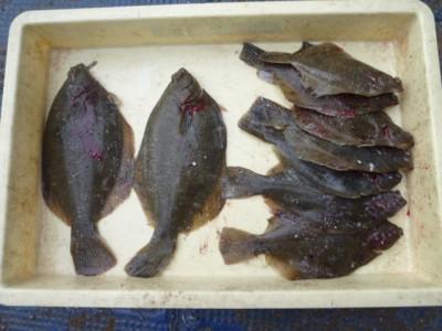 <p>枚方市のタカツキ様、沖の一文字北で、カレイ 32㎝まで9匹</p> <p>投げ釣り 餌青イソメ</p>